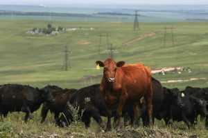 Вязниковский район объединит 50 фермеров в мясной кластер