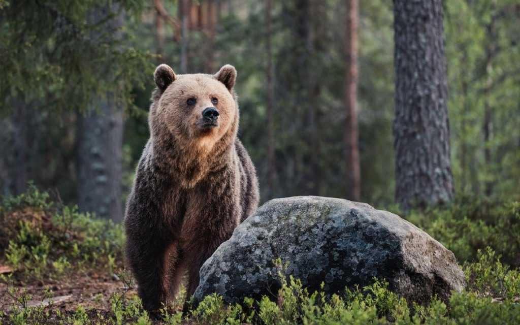 Славяне издревле почитали медведя