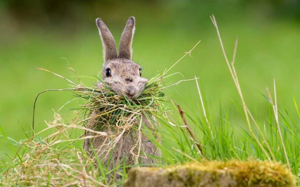Зайца съесть — великий грех