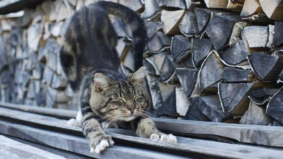 Котик сидит