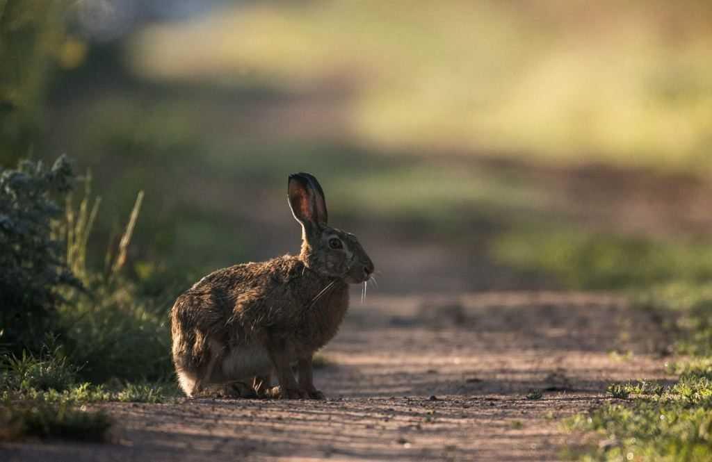 Заяц на дороге