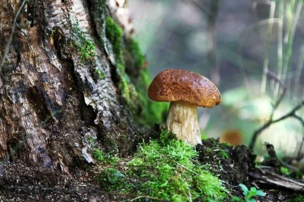 Мало грибов в лесу - к суровой зиме