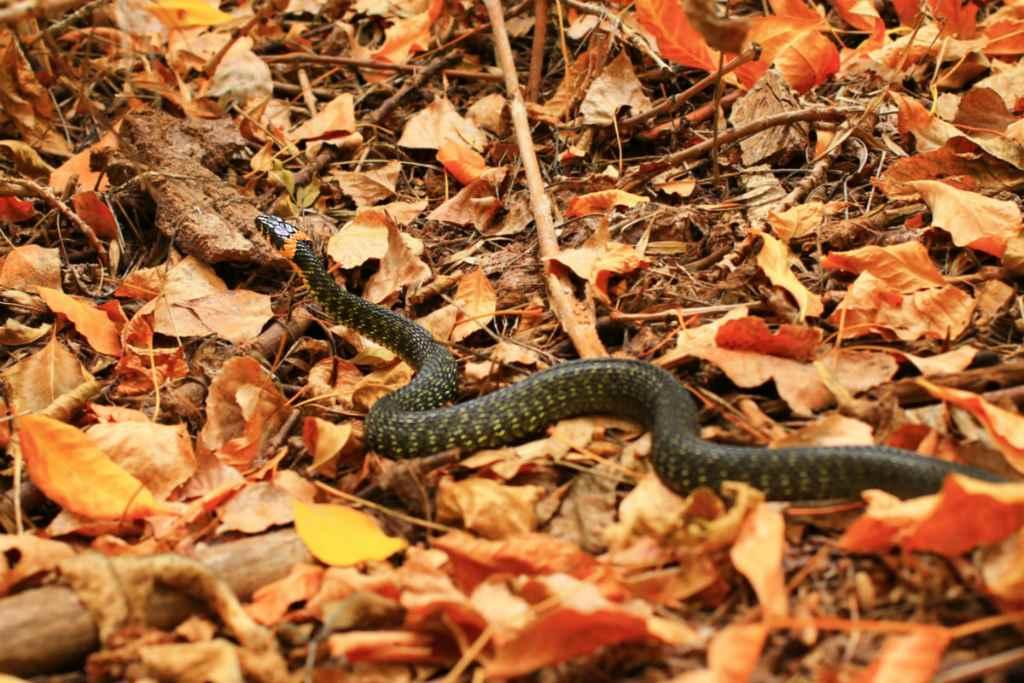 Змеи в листве