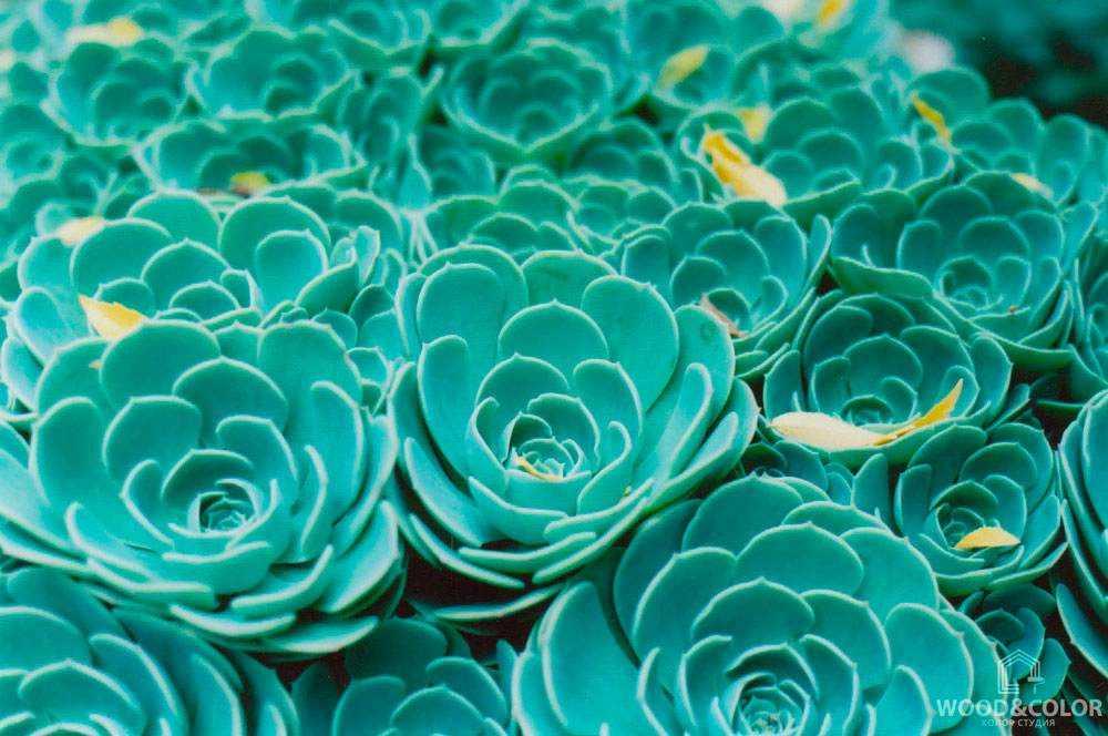 Изумрудные цветы