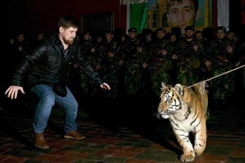 Тигр и Кадыров