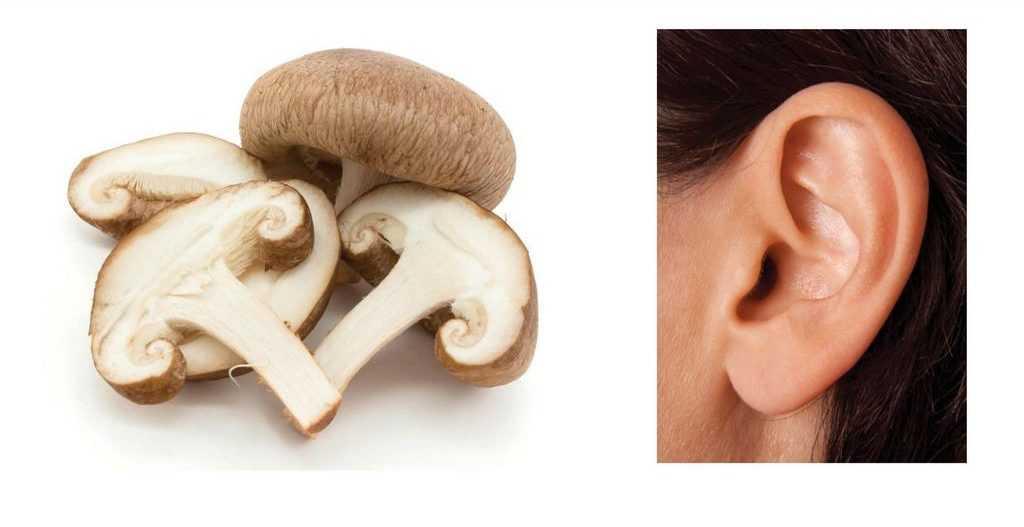Шампиньоны и уши