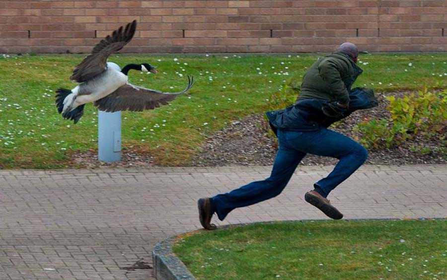 Чем опасен помёт птиц для автомобильного кузова