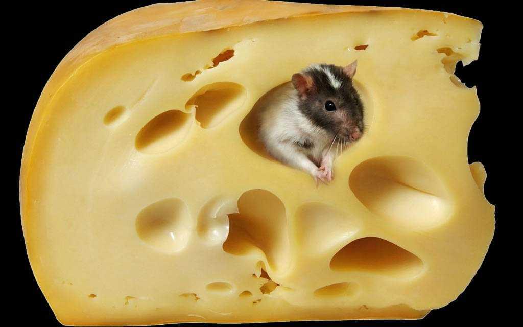 Лучшие и худшие марки «Российского» сыра