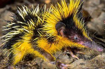 Удивительные животные, о которых мы раньше не слышали