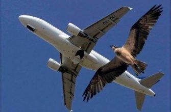 Что известно о самой громкой птице — одноусом звонаре