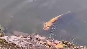 Какое существо было показано в ролике о «рыбе с человеческим лицом»