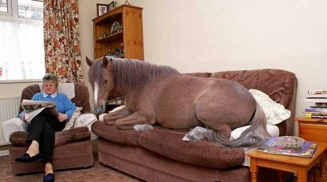 лошадь на диване
