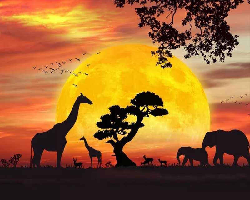 Как создавалась мелодия к телепрограмме «В мире животных»