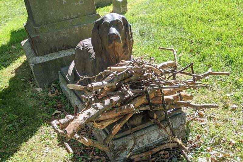 По какой причине на бруклинском кладбище прихожане носят палки на могилу собаки