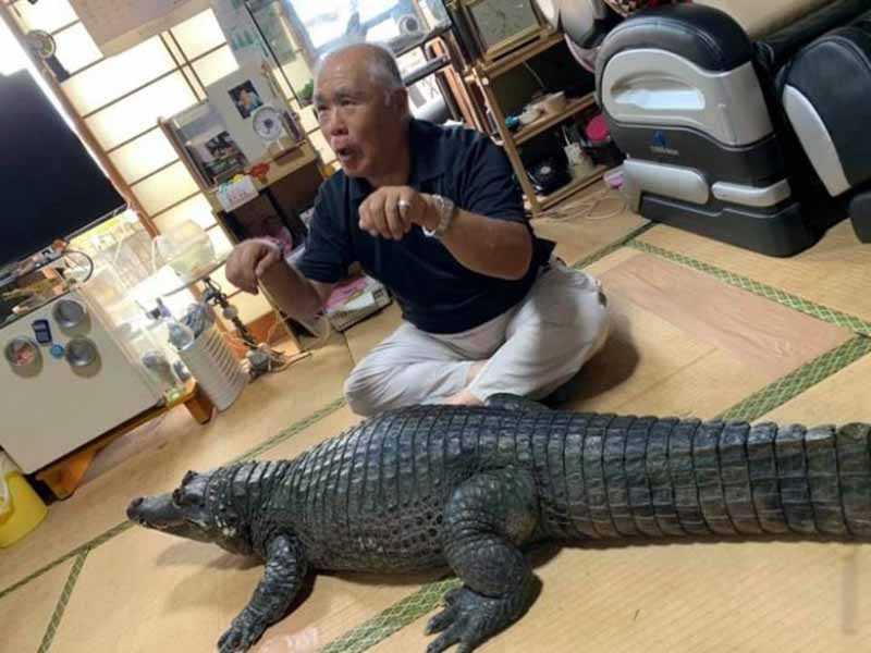 Нобумицу купил крокодила в зоомагазине