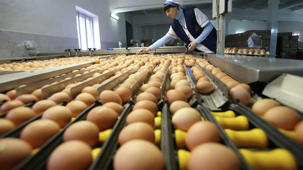 Минсильехоз: нет никаких предпосылок для роста цен на яйца и птицу