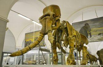 Плотник украл более 50-ти черепов древних животных из петербуржского Зоологического института