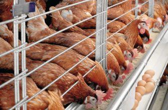 7 сотрудников российской птицефабрики заразились птичьим гриппом