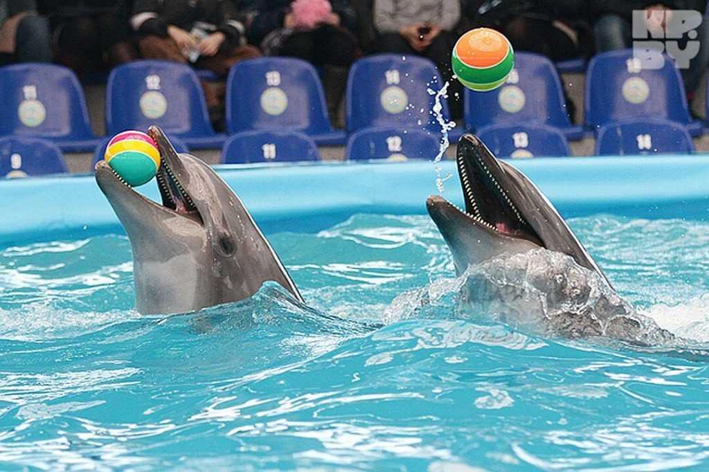 Может вступить в силу закон о запрете вылова млекопитающих для дельфинариев