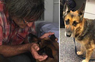 Как пес спас тонувшего хозяина, проплыв 11 км за помощью