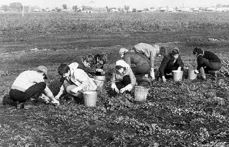 всем советским студентам нужно было ехать на обязательную работу в поля,