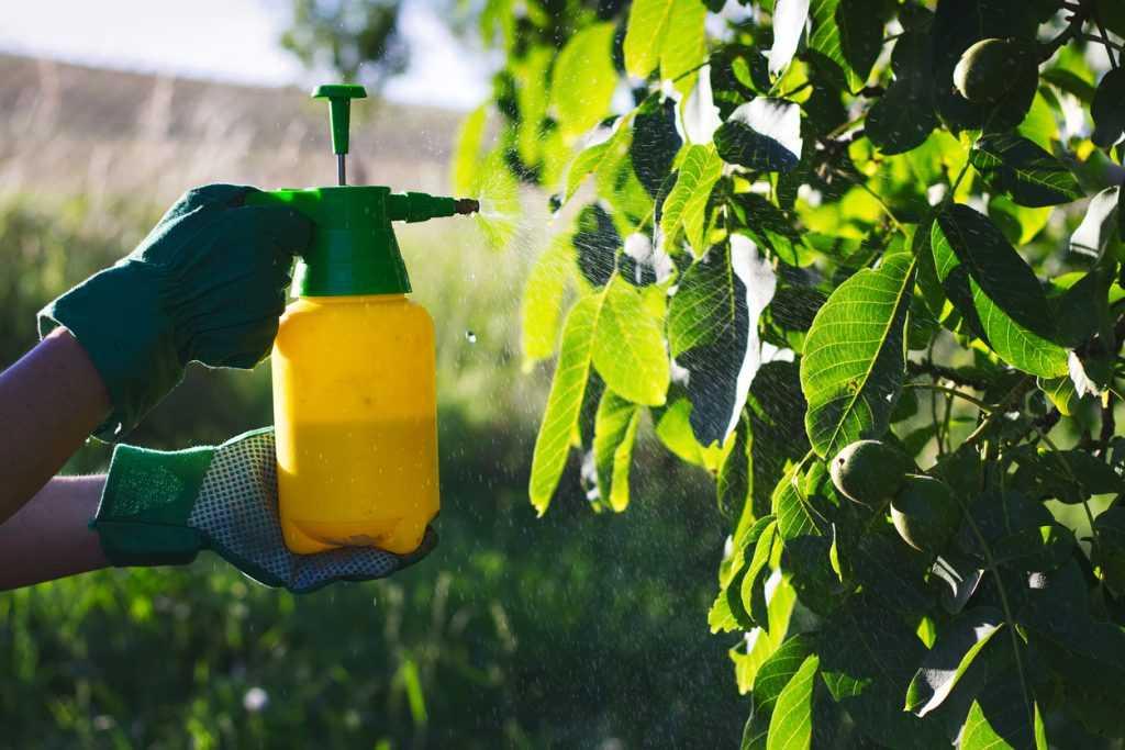 В России планируют выдавать углеродные кредиты в обмен на высадку деревьев
