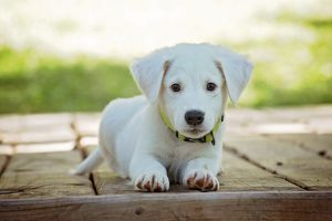 В России зарегистрировали первую антиковидную вакцину для животных
