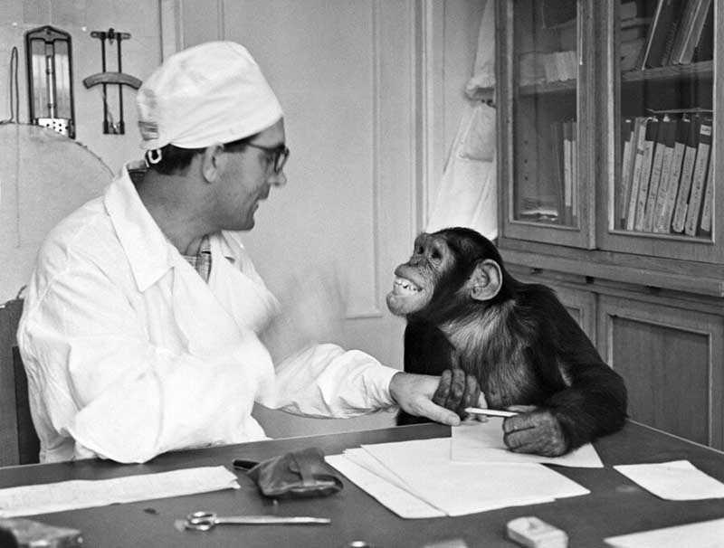 ученый Илья Иванов, который привез в страну 20 шимпанзе и занялся их скрещиванием с биоматериалами человека