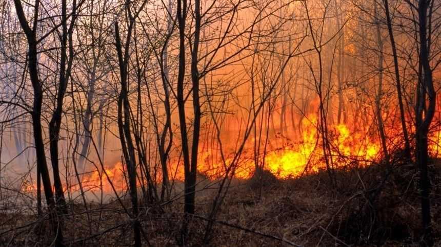 Горит Югра. Площадь лесных пожаров увеличилась в 10 раз