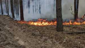 Лесные пожары в Югре увеличились в 10 раз
