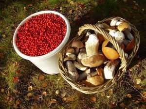 В России уточнили новые правила сбора грибов и ягод