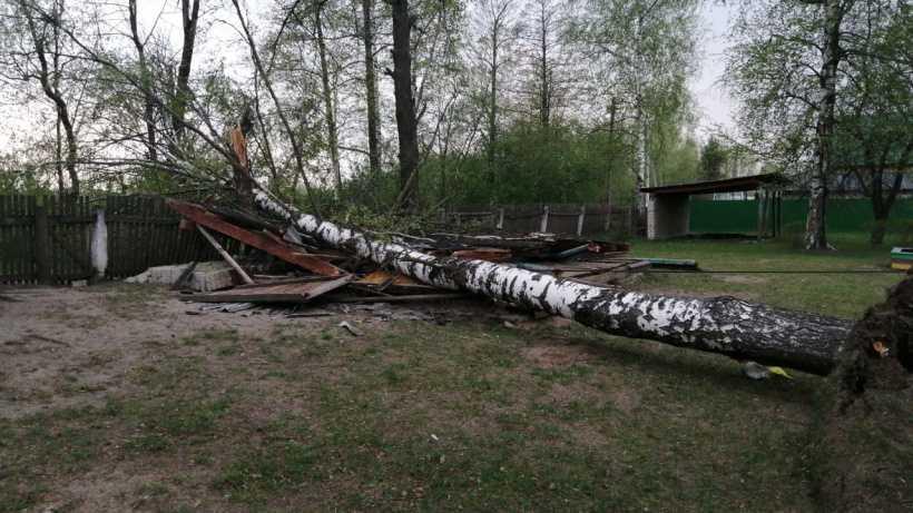 Сильный ветер в Москве обрушил деревья