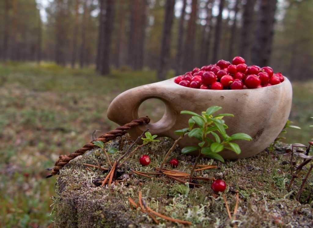 Россияне могут собирать ягоды и грибы без ограничений для собственных нужд