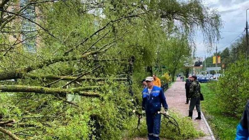 Ураганный ветер в столице обрушил деревья