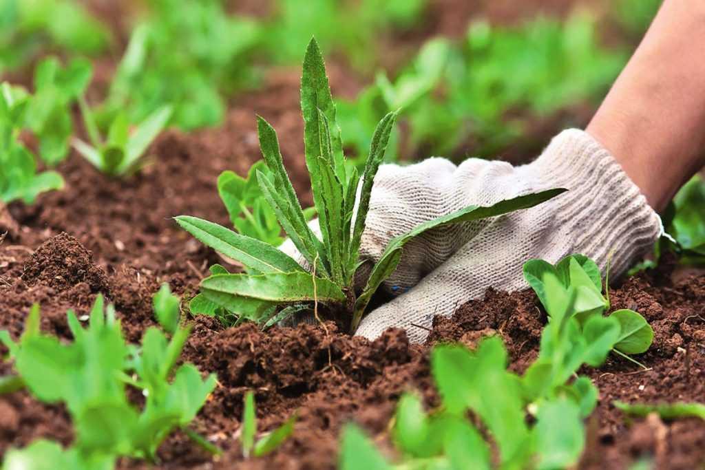 Россиянам будут выписывать штрафы за сорняки на своих участках