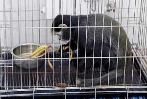В автобусе Москва-Махачкала была обнаружена обезьяна