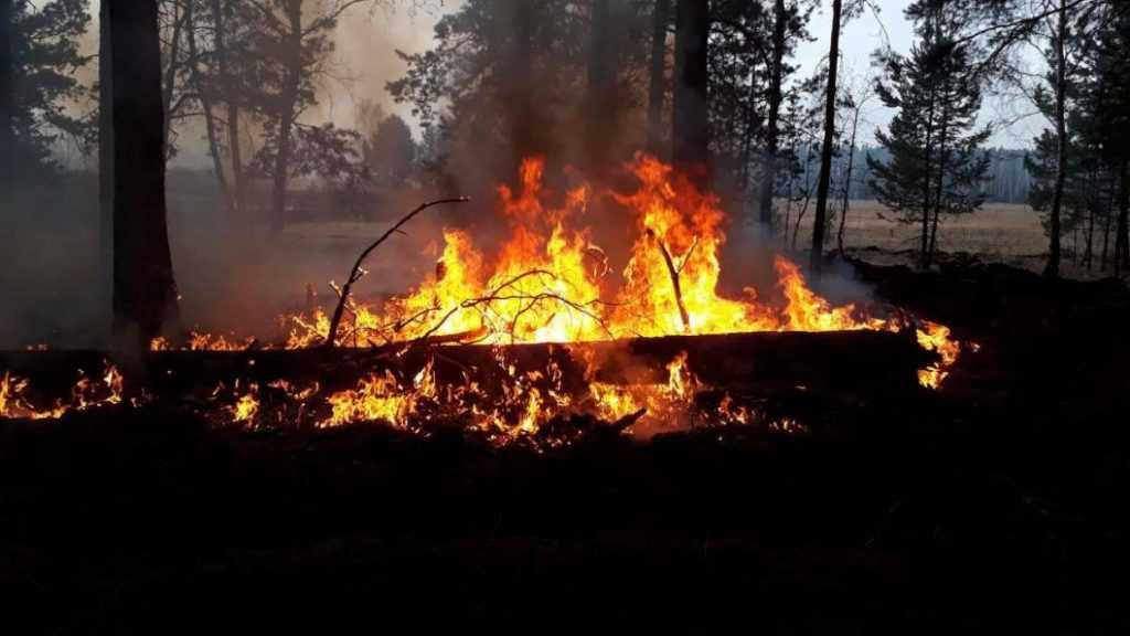 Потушили крупный лесной пожар в Тюменской области