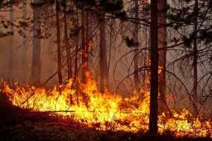 Власти Иркутской и Якутской области занижают статистику по лесным пожарам