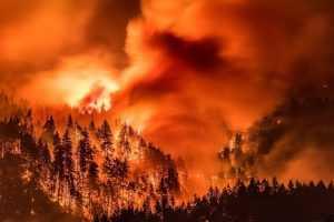 Занижение данных по лесным пожарам в Иркутской и Якутской областях