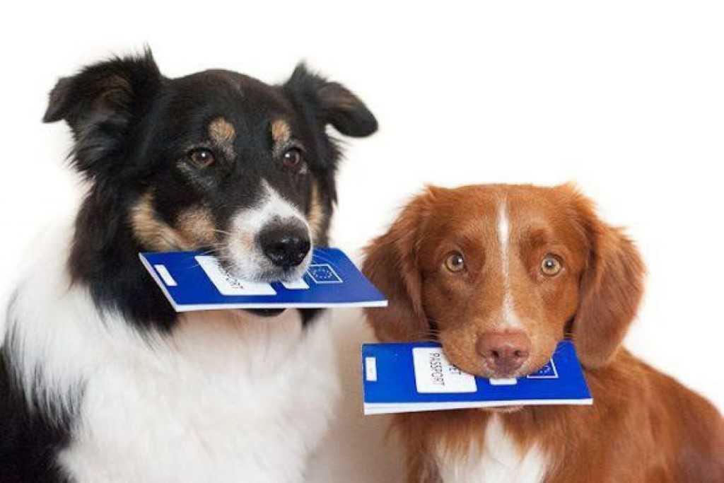В Татарстане хотят ввести регистрацию кошек и собак