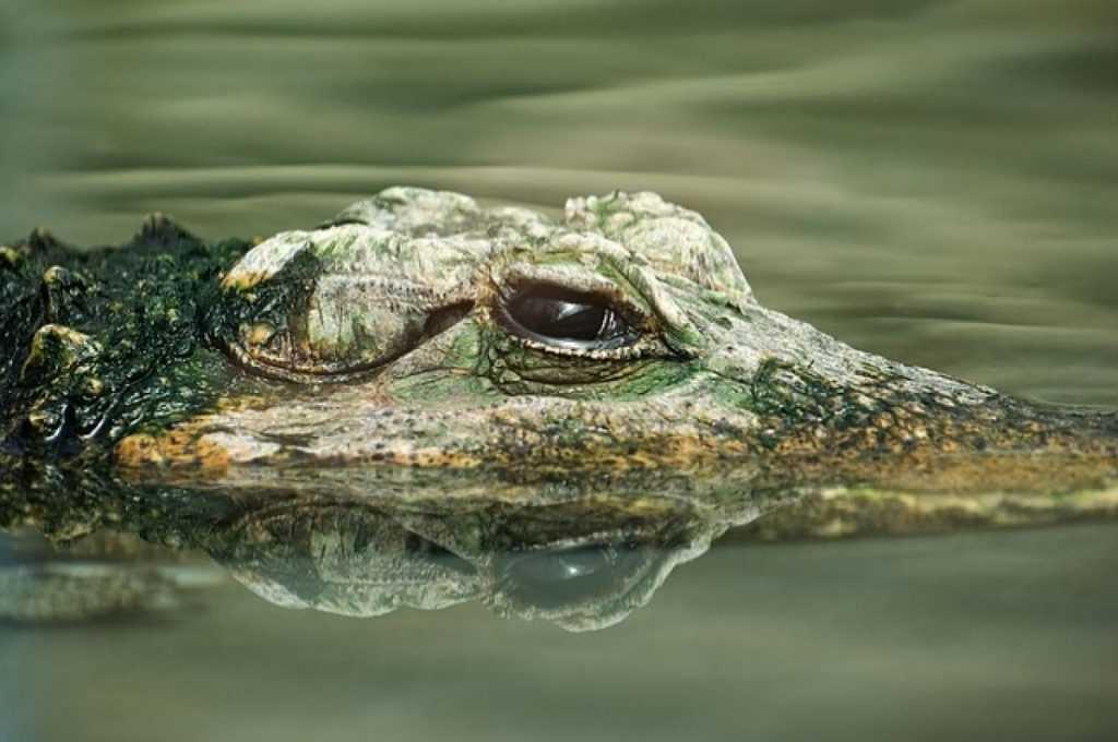 Сильные ливни затопили ялтинский крокодиляриум
