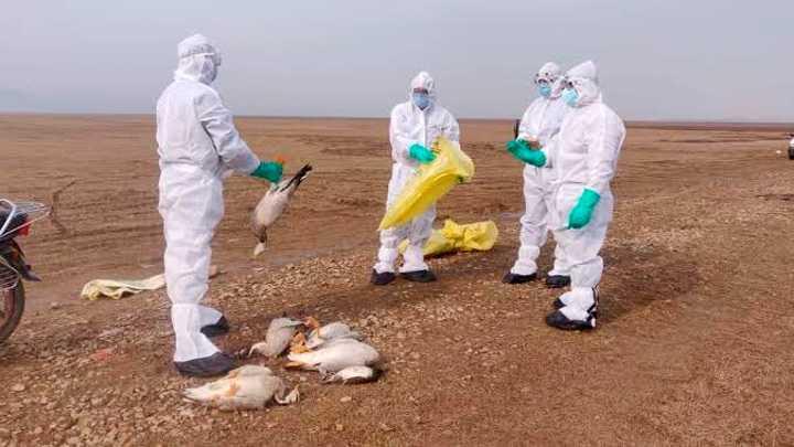 В Индии первый человек умер от птичьего гриппа
