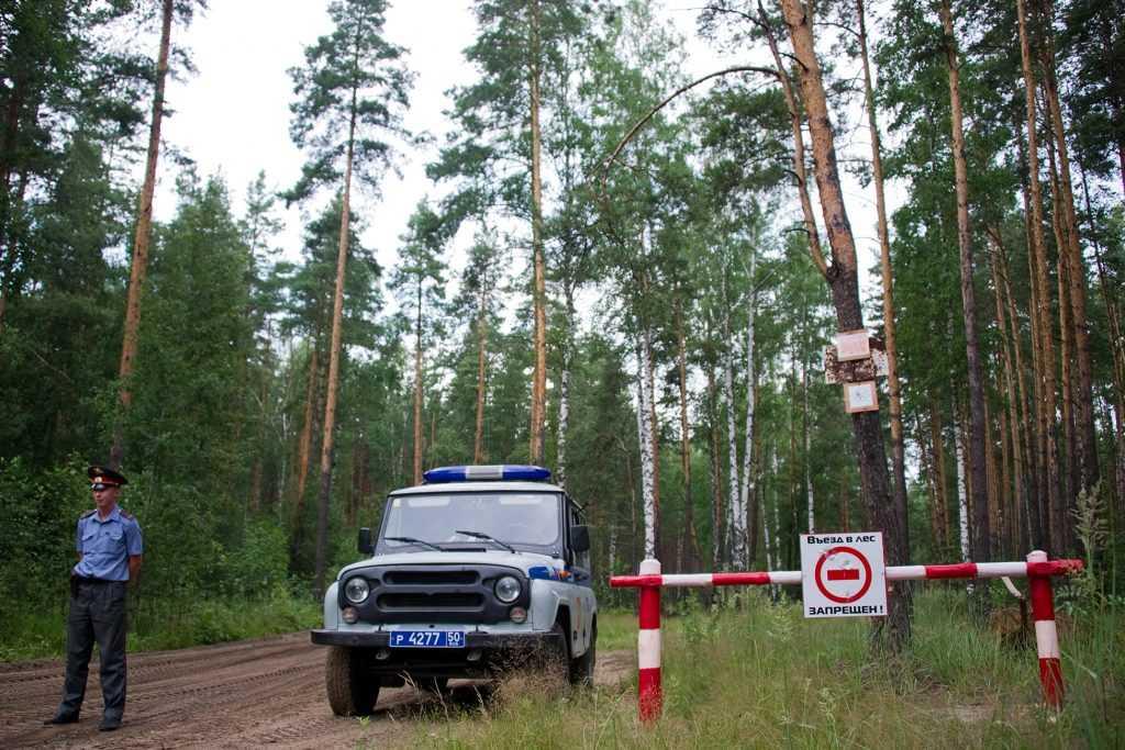 Леса в Подмосковье закрыты для посещения
