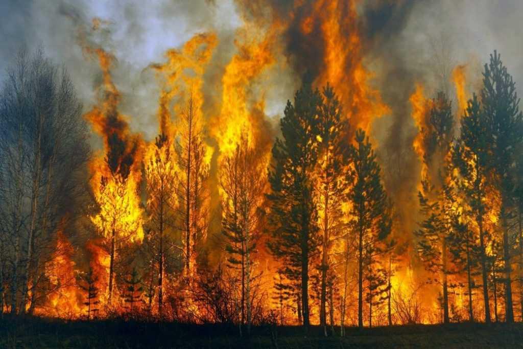 За прошлые сутки российскими службами было потушено больше 100 лесных пожара