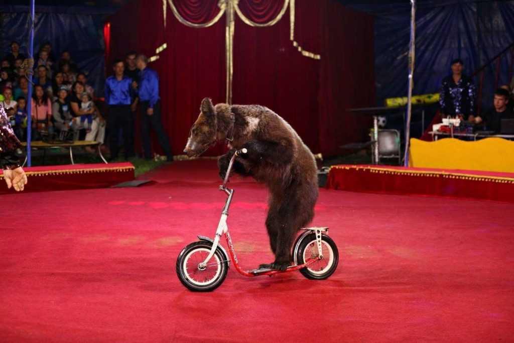 Медведь напал на дрессировщицу