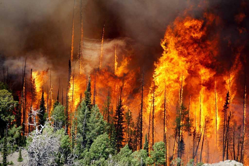 За сутки на территории РФ было потушено более 80 природных пожаров