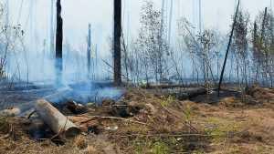 В заповеднике Мордовии увеличивается площадь пожара