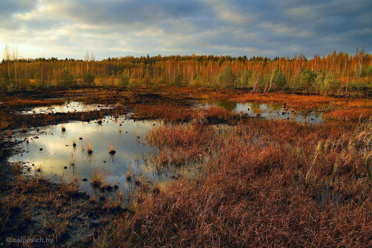 Нашли на болоте в паре километров от города: МЧС нашли пропавшую девочку