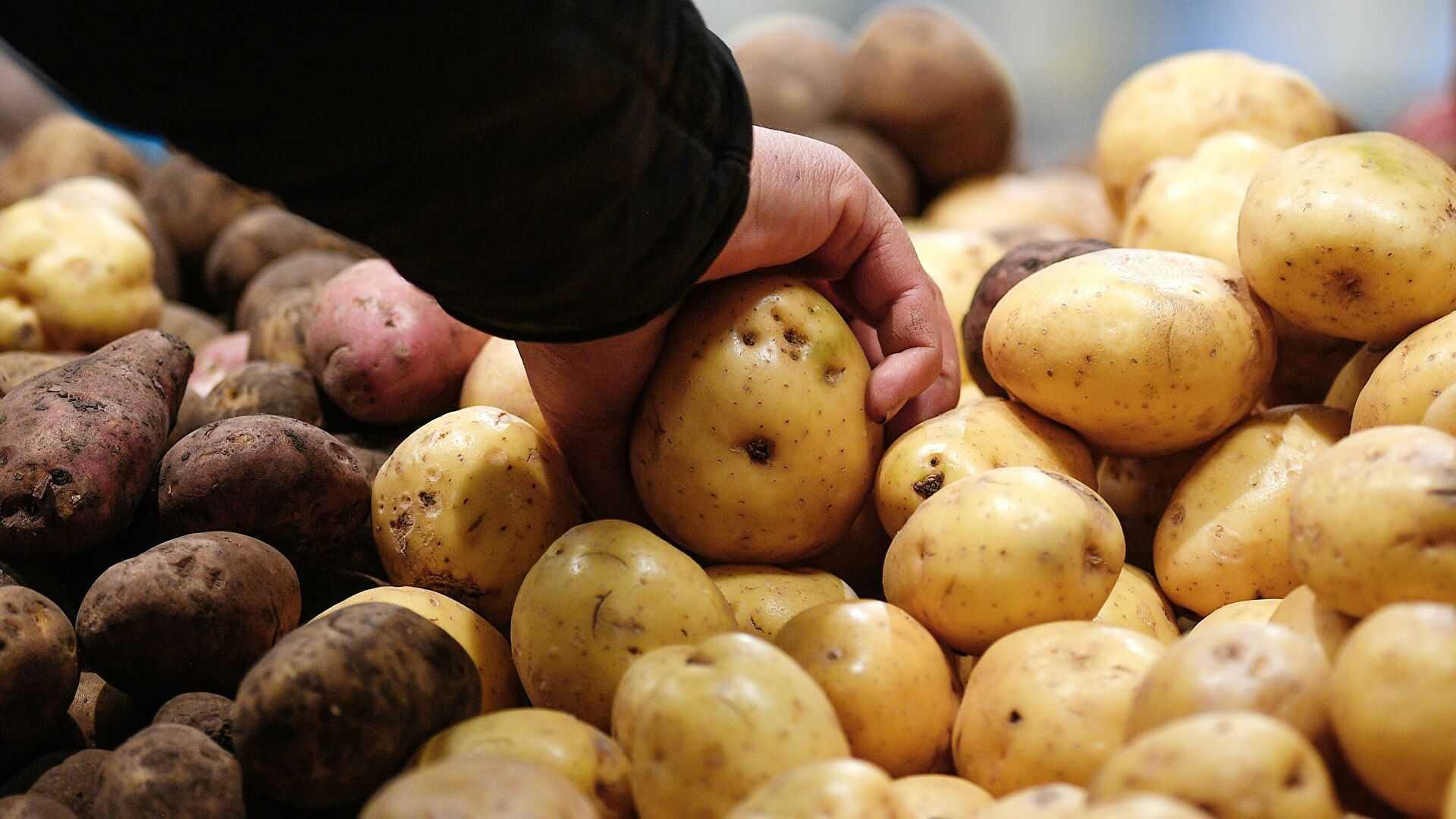 Эксперты объяснили резкий рост цен на мясо и овощи
