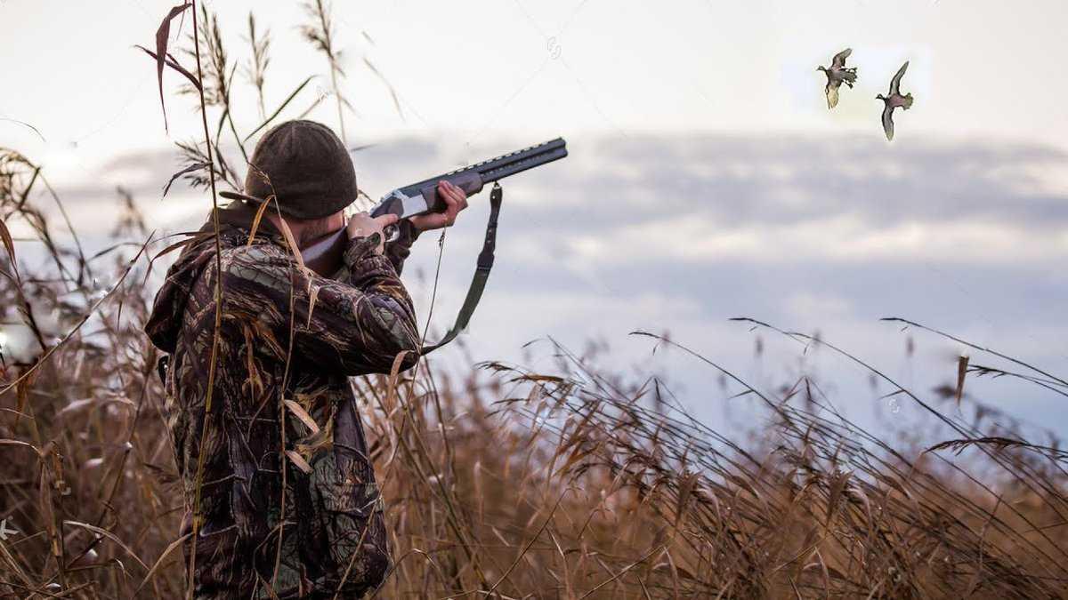 Российским чиновникам могут запретить стрелять в животных